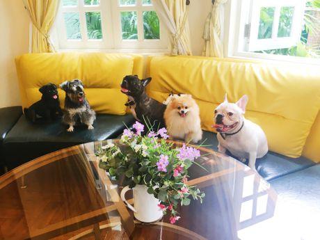 Bed and Pet first - khach san chuan 5 sao cho thu cung - Anh 8