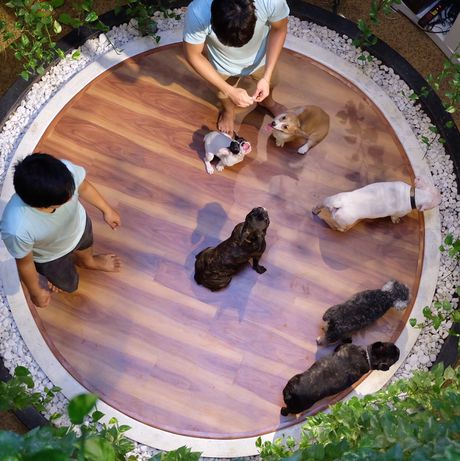 Bed and Pet first - khach san chuan 5 sao cho thu cung - Anh 9