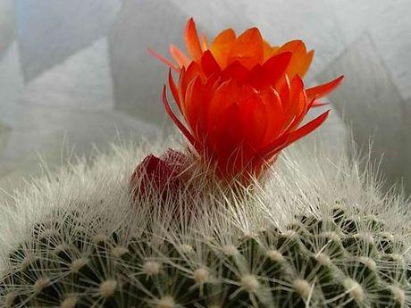 Ky thuat trong xuong rong cho hoa no quanh nam - Anh 3