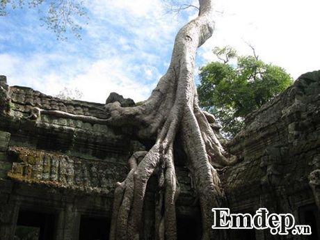 Kham pha Angkor bang xe dap - Anh 8