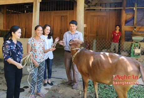 Bao Nghe An tang bo sinh san cho ho ngheo o Xieng My - Anh 3