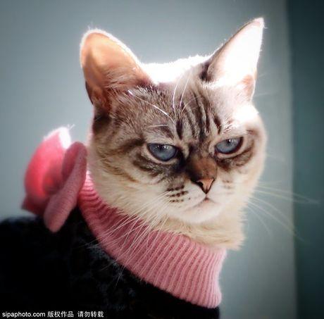 Ngam ky phung dich thu cua meo Grumpy Cat noi nhu con - Anh 10