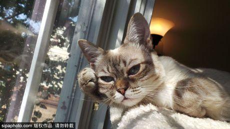 Ngam ky phung dich thu cua meo Grumpy Cat noi nhu con - Anh 11
