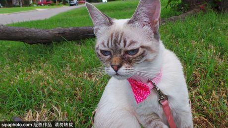 Ngam ky phung dich thu cua meo Grumpy Cat noi nhu con - Anh 12
