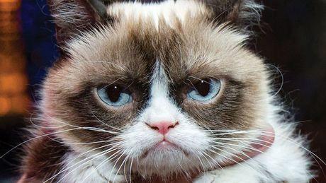 Ngam ky phung dich thu cua meo Grumpy Cat noi nhu con - Anh 1