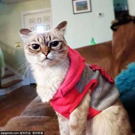 Ngam ky phung dich thu cua meo Grumpy Cat noi nhu con - Anh 2