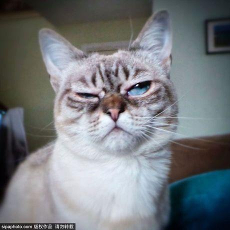 Ngam ky phung dich thu cua meo Grumpy Cat noi nhu con - Anh 3