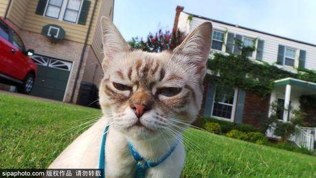 Ngam ky phung dich thu cua meo Grumpy Cat noi nhu con - Anh 4