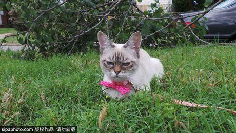 Ngam ky phung dich thu cua meo Grumpy Cat noi nhu con - Anh 5