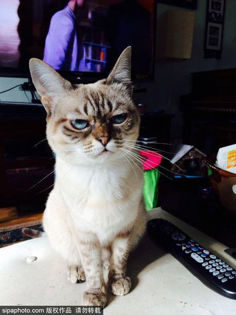 Ngam ky phung dich thu cua meo Grumpy Cat noi nhu con - Anh 6