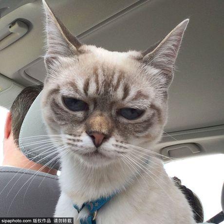 Ngam ky phung dich thu cua meo Grumpy Cat noi nhu con - Anh 7