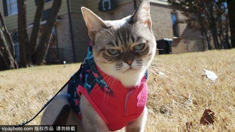 Ngam ky phung dich thu cua meo Grumpy Cat noi nhu con - Anh 8