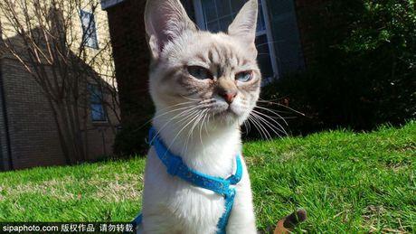 Ngam ky phung dich thu cua meo Grumpy Cat noi nhu con - Anh 9