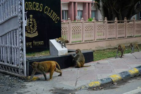 Khi nao loan duong pho New Delhi - Anh 3