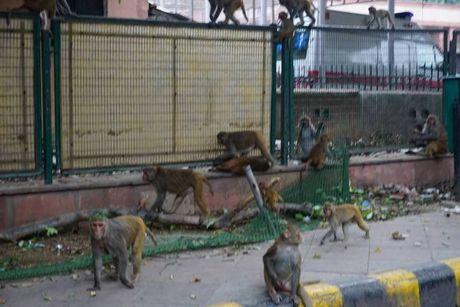 Khi nao loan duong pho New Delhi - Anh 5