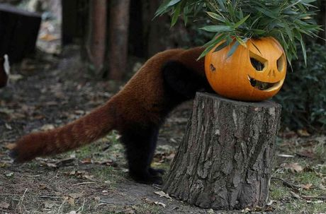 Khong khi ron rang le hoi Halloween tren khap the gioi - Anh 1
