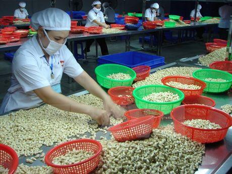 Binh Phuoc thieu nguyen lieu de san xuat dieu - Anh 1