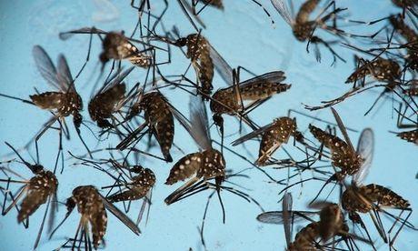 Binh Duong cong bo dich benh do vi rut Zika gay ra - Anh 1