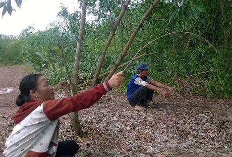 Thua Thien – Hue: Kenh tien ty dap chieu, dong ruong khat nuoc - Anh 2
