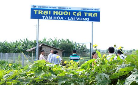 I.D.I hinh thanh vung nuoi ca tra - Anh 1