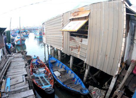 'Khu o chuot' tren bien Quy Nhon - Anh 3