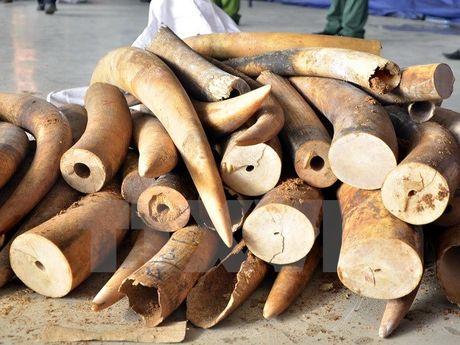 Phat hien them vu van chuyen 700kg nga voi nguy trang trong go - Anh 1
