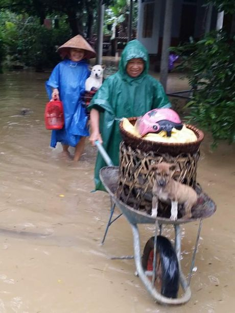 Lu o Quang Binh: Hang ngan ho dan chay dua tranh lu - Anh 7