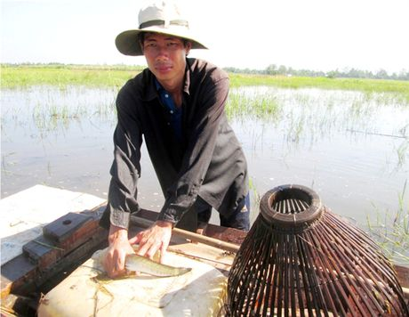 [Anh]: Nghe day con bat ca loc o mien Tay - Anh 9