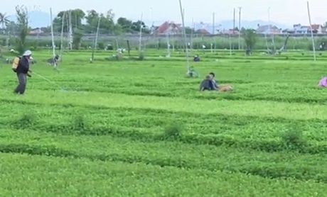 Phu Yen: Nang cao nhan thuc ve nong nghiep sach cho nong dan - Anh 1