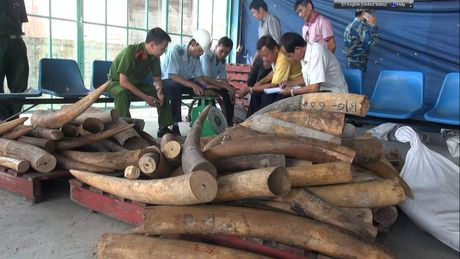 Phat hien gan 500kg nghi nga voi nhap lau tai cang Cat Lai - Anh 2