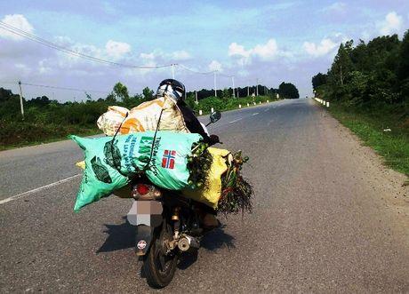 Bat thuong viec mua cau ban sang Trung Quoc lam thuoc… cho dan ong - Anh 1