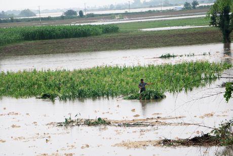 Nam Trung bo ngap trong mua lu, thuy dien song Ba Ha tang xa lu len 10.400 m³/giay - Anh 8