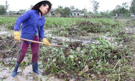 Quang Tri: Beo luc binh 'khung' tran ve sau lu, quan doi ve giup dan lam sach ruong - Anh 2