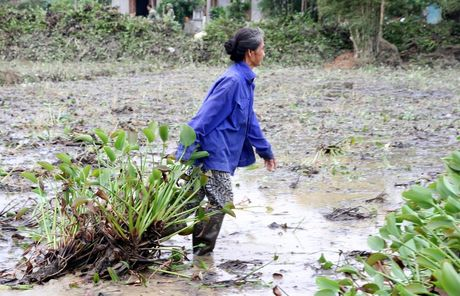 Quang Tri: Beo luc binh 'khung' tran ve sau lu, quan doi ve giup dan lam sach ruong - Anh 3