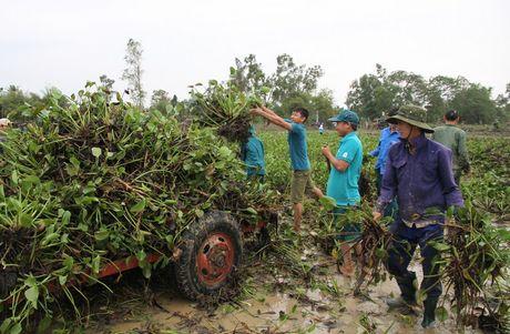Quang Tri: Beo luc binh 'khung' tran ve sau lu, quan doi ve giup dan lam sach ruong - Anh 5