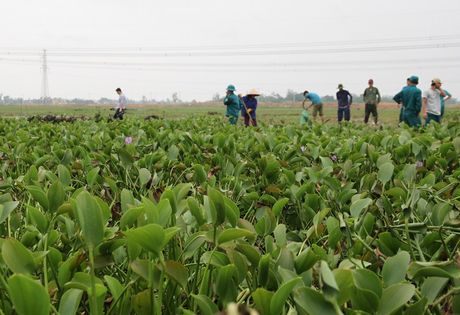 Quang Tri: Beo luc binh 'khung' tran ve sau lu, quan doi ve giup dan lam sach ruong - Anh 8