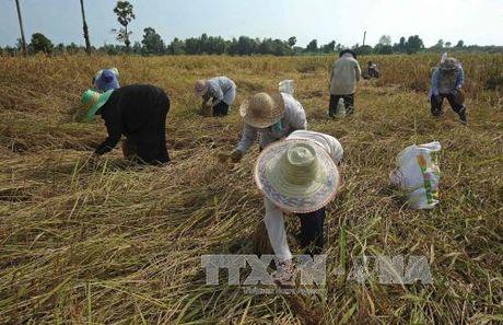 Thu tuong Thai Lan tran an nong dan khi gia gao sut giam - Anh 1