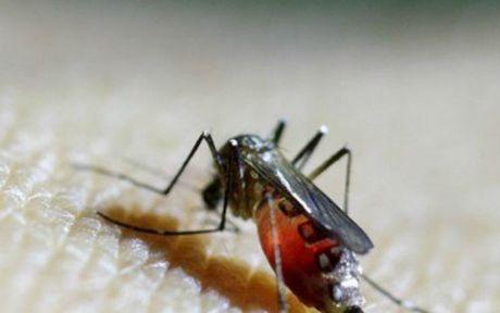 Benh nhan mac Zika tang dot bien o TP. HCM, 4 thai phu duong tinh voi virus Zika - Anh 1
