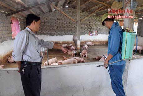 Yen Thanh can 20 nghin lieu vac xin chong dich tai xanh - Anh 2