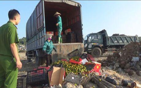 Quang Ninh: Tieu huy gan 2 tan hoa qua khong ro nguon goc - Anh 1