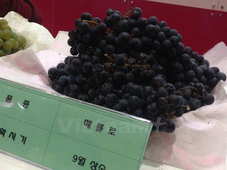 Thuong thuc ruou vang Yeongcheon tai Seoul Food Week 2016 - Anh 2
