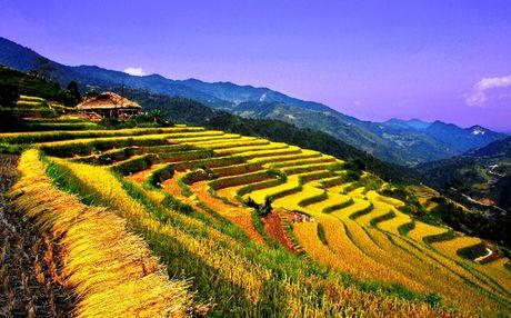 Ruong bac thang - Diem den hap dan o Ha Giang - Anh 1
