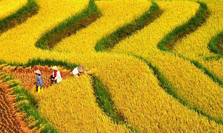 Ruong bac thang - Diem den hap dan o Ha Giang - Anh 2