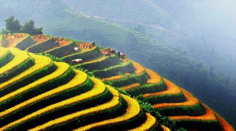 Ruong bac thang - Diem den hap dan o Ha Giang - Anh 4