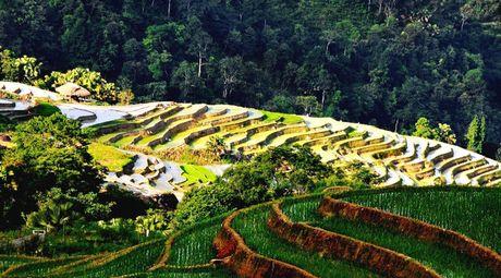 Ruong bac thang - Diem den hap dan o Ha Giang - Anh 5