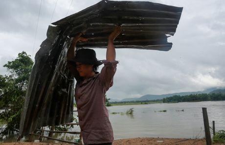 Tan hoang vung ron lu Phu Yen - Anh 4