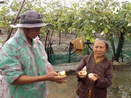 San xuat nong nghiep Ninh Thuan thiet hai nang ne do mua lu - Anh 5