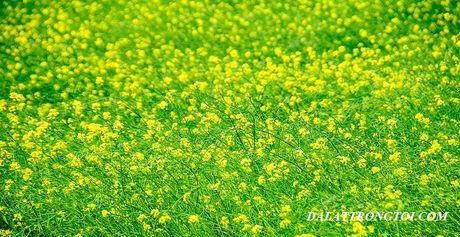 Nhung canh dong hoa cai dep ngan ngo tu Bac vao Nam - Anh 12