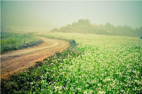 Nhung canh dong hoa cai dep ngan ngo tu Bac vao Nam - Anh 2