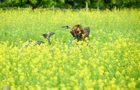 Nhung canh dong hoa cai dep ngan ngo tu Bac vao Nam - Anh 8